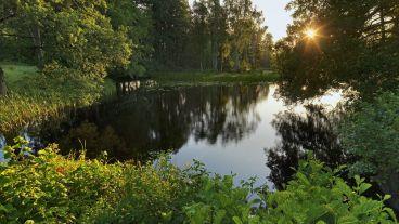 pond-under-the-sunlight-1080p-nature-desktop-wallpaper-31113