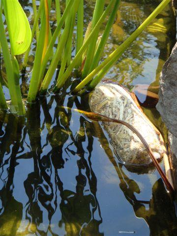 barley-bale-pond