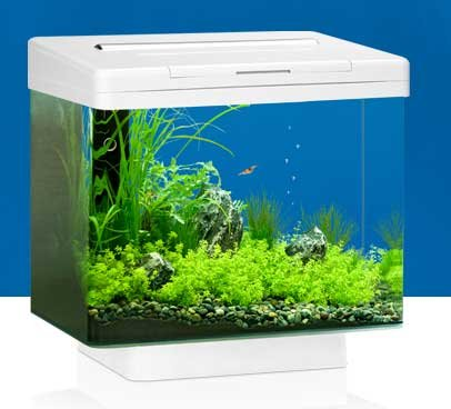 juwel-vio-40-led-white-aquarium-0