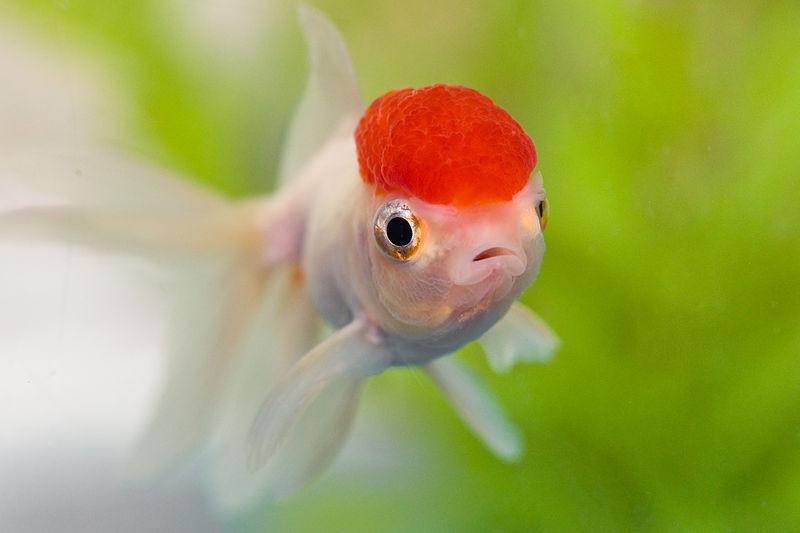 800px-new_fish212121_3