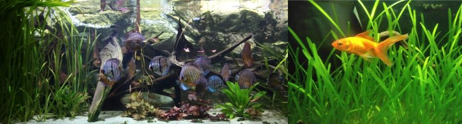 tropical_aquarium_palais_de_la_porte_doree