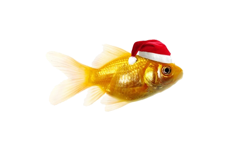 welch-fishmongers-christmas-new-year-opening-times