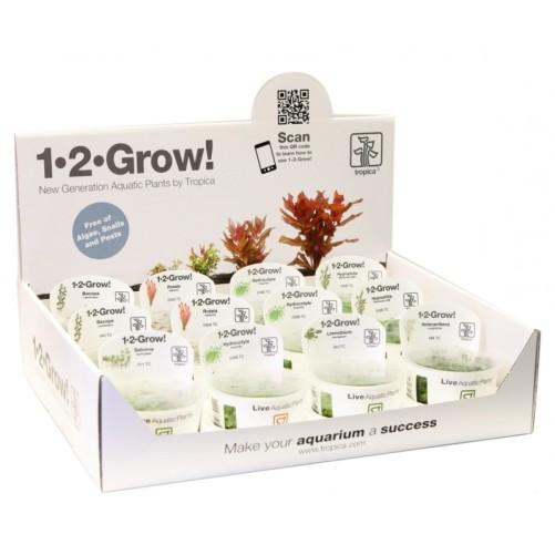 tropica-eleocharis-acicularis-mini-1-2-grow-dwarf-hairgrass